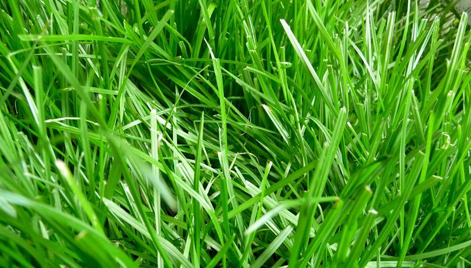 Das Grasdach