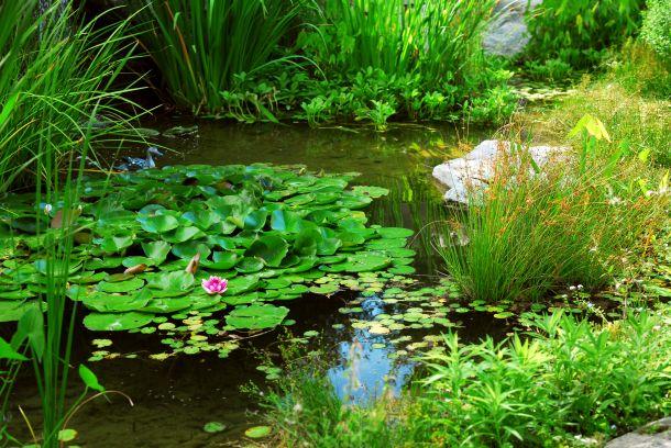 Schneiden Sie die Pflanzen regelmäßig kräftig zurück. (Bildquelle: elenathewise / clipdealer.de)