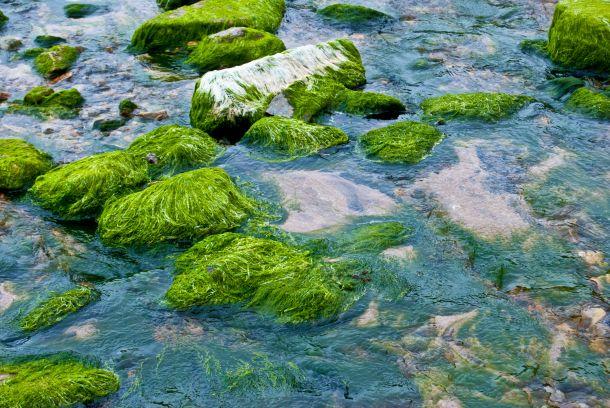 Wenn der Teich mit einem Algenteppich bedeckt ist, so sollten Sie das Wasser komplett ablassen bzw. abpumpen (Bildnachweis: Jule Berlin / clipdealer.de)