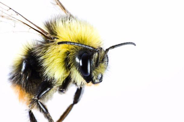 Fliegengitter sind eine Dauerlösung, um sich vor lästigen Insekten im Haus zu schützen. (Fotoquelle: gewoldi / clipdealer.de)