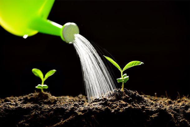 Die Nutzung von Regenwasser ist schonend für die Umwelt und den Geldbeutel. (Fotoquelle: amenic181 / clipdealer.de)