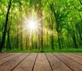 Holz erlebt ein großes Comeback. (Fotoquelle:  kalinavova / clipdealer.de)