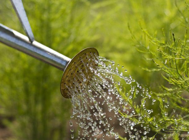 Regenwasser ist nicht zu kalt und enthält weder Chlor noch Kalk. Das ist perfekt für das Gemüse. (Fotoquelle:  dusanzidar / clipdealer.de)