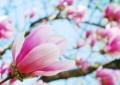 Der Frühling hält Einzug, die Natur erblüht. (Fotoquelle: virynja / clipdealer.de)