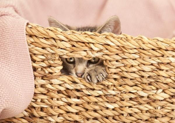 kitten in basket kratzbaum
