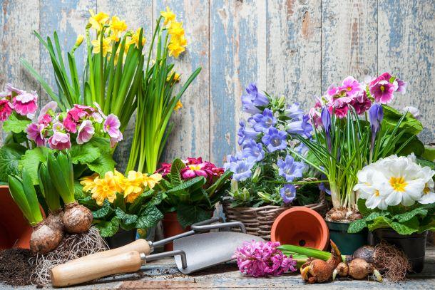 Im Frühling werden nicht nur neue Pflanzen gesetzt, bestehende Pflanzen sollten geschnitten werden. (Fotoquelle: alexraths / clipdealer.de)