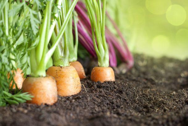 Überlegen Sie gut, welche Gemüsesorten Sie anbauen möchten und planen Sie dann eine realistische Größe. (Fotoquelle: udra / clipdealer.de)