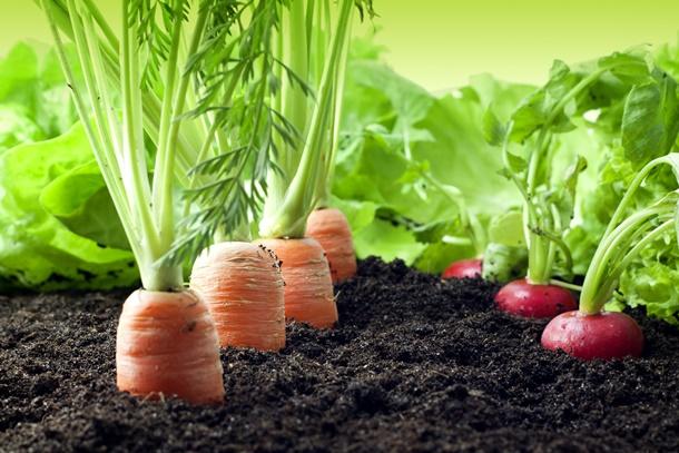 Die richtige Kombination von Gemüse mit anderen Gemüsesorten und Kräutern ist entscheidend. (Bildquelle: udra, clipdealer.de)