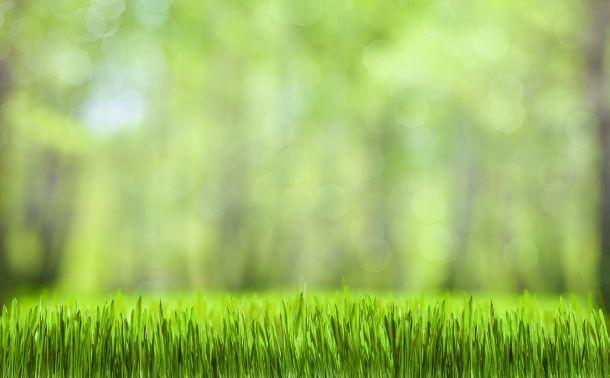 Wenn Sie einen schönen grünen Teppich haben wollen, sollten Sie einige Fehler unbedingt vermeiden. (Fotoquelle: andreykuzmin / clipdealer.de)