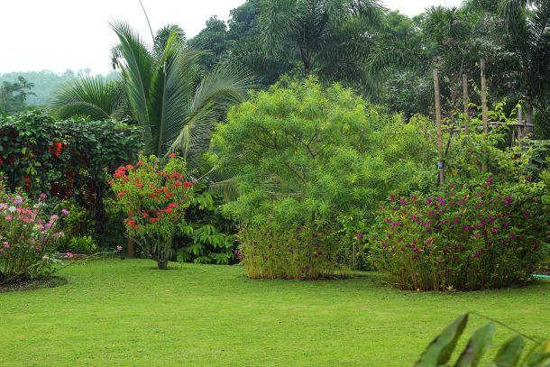Der Zierrasen ist geeignet für Zier- und Vorgärten sowie für kaum beanspruchte, sonnige Gartenflächen. (Fotoquelle: seagames50 / clipdealer.de)