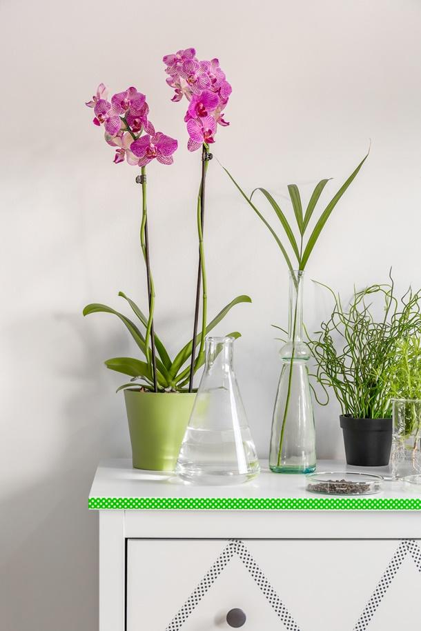 Unter den richtigen Umständen ist die Haltung und Pflege einer Orchidee nicht schwer. (Bildquelle: bialasiewicz, clipdealer.de)