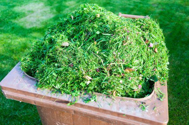 Der Mähroboter schneidet nur die Grasspitzen, das Entsorgen des Rasenschnittes ist nicht notwendig. (Fotoquelle:  windsurfer62 / clipdealer.de)
