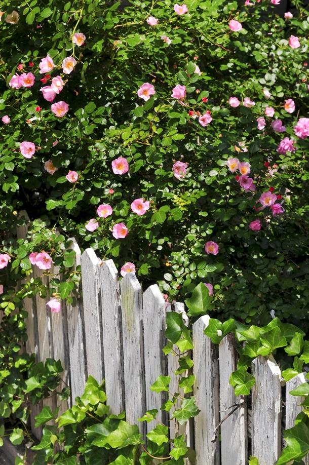 Lassen Sie Ihren Garten mit den Pflanzen außerhalb des Gartens verschmelzen!(Bildquelle: elenathewise, clipdealer.de)