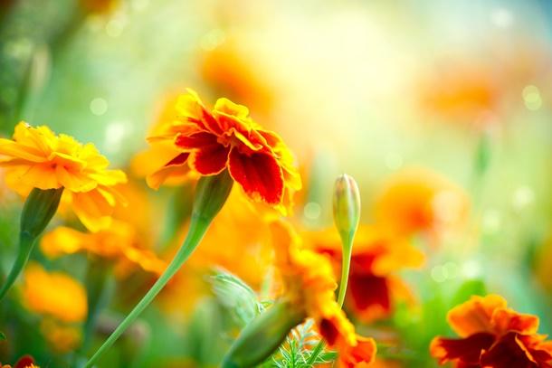 Die Farbenlehre spielt auch bei der Gartengestaltung eine wichtige Rolle! (Bildquelle: subbotina, clipdealer.de)