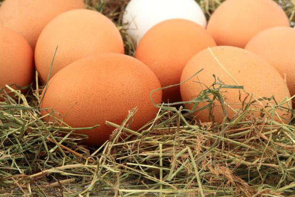 Bei einem eigenen Hühnerstall sind Sie sicher, Eier von gesunden und glücklichen Hühnern zu haben. (Fotoquelle:  TK-photography / clipdealer.de)