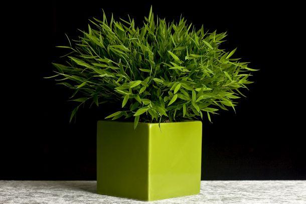 Bei Pflanzenkübeln gibt es die unterschiedlichsten Materialien, Formen und Stile. (Fotoquelle: glenamoy / clipdealer.de)
