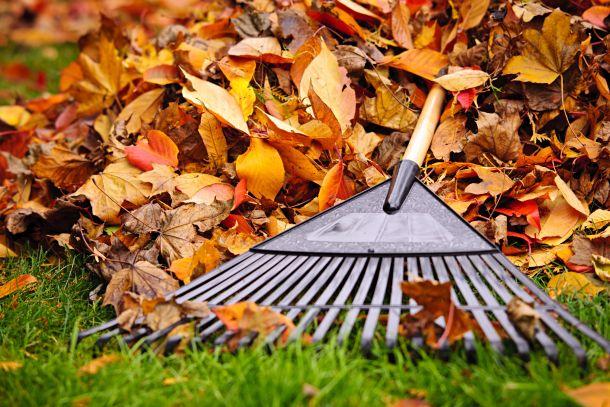Zu spät im Herbst sollten Sie nicht mehr vertikutieren. (Fotoquelle: elenathewise / clipdealer.de)