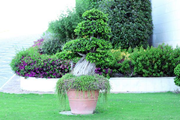 Terrakotta-Übertöpfe sind der perfekte Begleiter zum mediterranen Gartenstil. (Fotoquelle: belchonock / clipdealer.de)