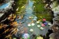 Wasserqalität im Fischteich überwachen und verbessern