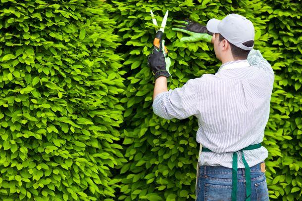 Der Nachbar kann einen Heckenrückschnitt verlangen, wenn die Bepflanzung in sein Grundtück hinein wächst. (Fotoquelle: stocking / clipdealer.de)