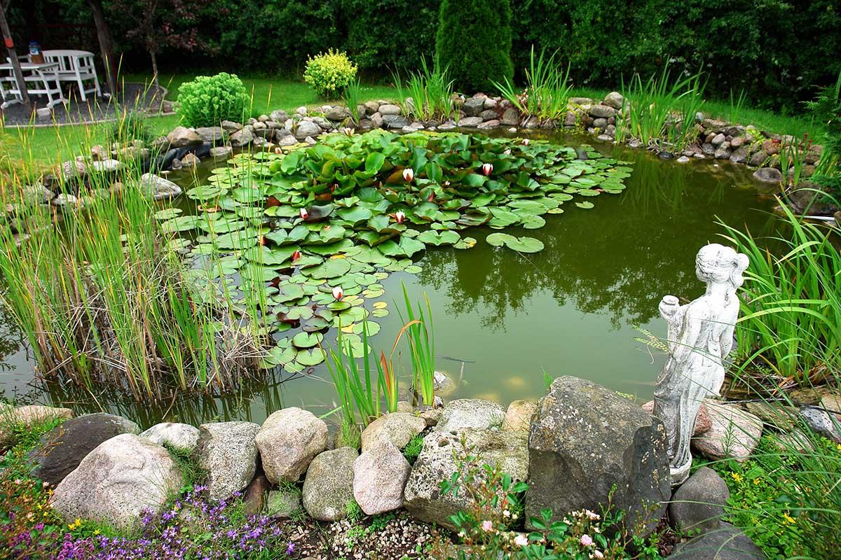 Feuchtbiotope stellen einen hervorragenden Lebensraum für Tier- und Pflanzenwelt dar.