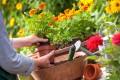 Rasenpflege für grüner Teppich in der Sommersaison