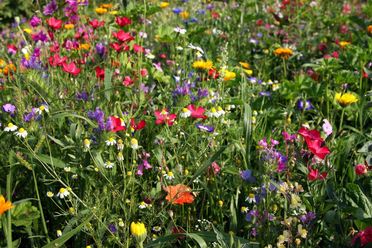 Naturnahe Gestaltung durch Blumenwiese