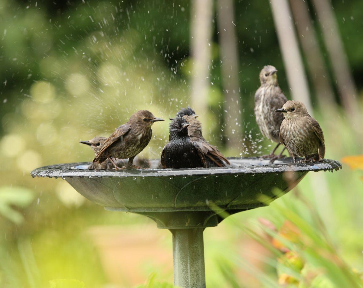 sichere Vogeltränke in einem naturnahen Garten
