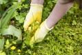 Moos ist ein großes Problem, das oft wegen falscher Rasenpflege entsteht.