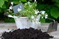 Mit dem Bepflanzen von Pflanzkübel bekommt man schöne Elemente im Garten.