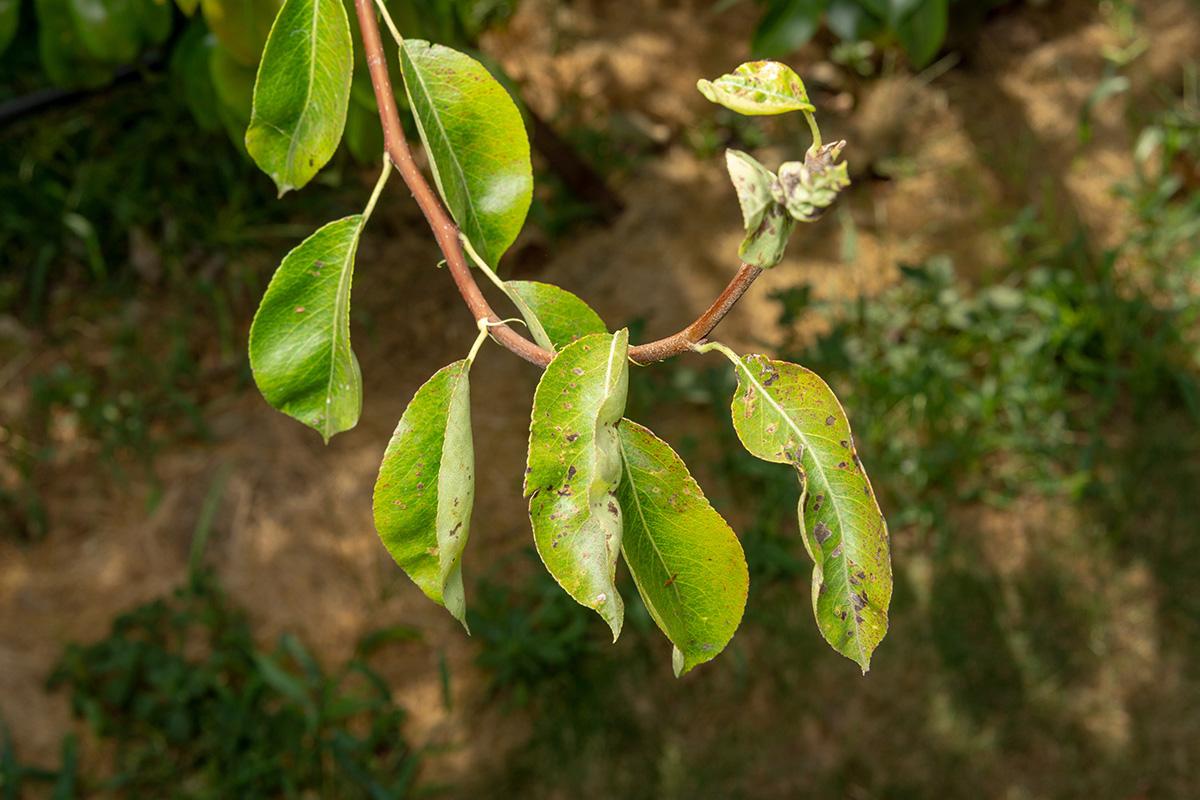 Pilzerkrankungen sind besonders tückisch, da sich die Sporen leicht verbreiten.