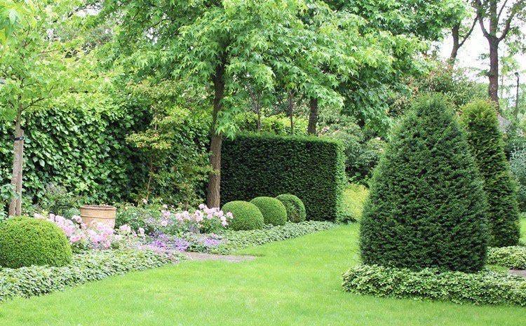 Gartengestaltung mit Hecken