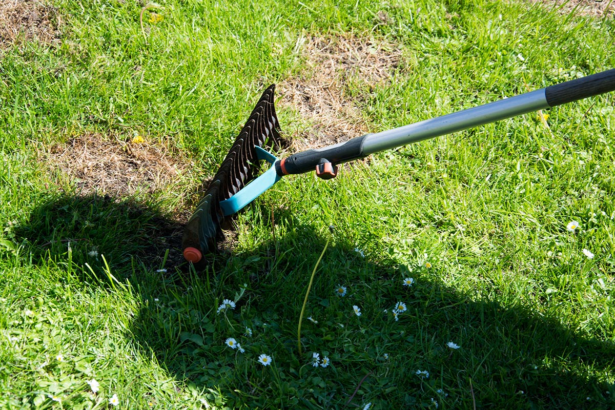 Das Nachsäen sorgt für den dichten Wachstum des grünen Teppichs im Garten.