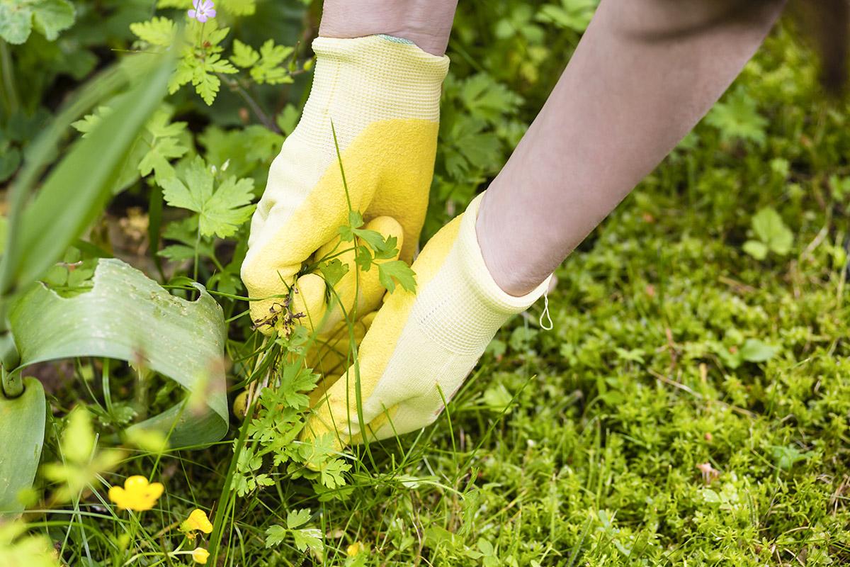Der Umwelt zuliebe ist es empfehlenswert, Hausmittel zur Bekämpfung anzuwenden.