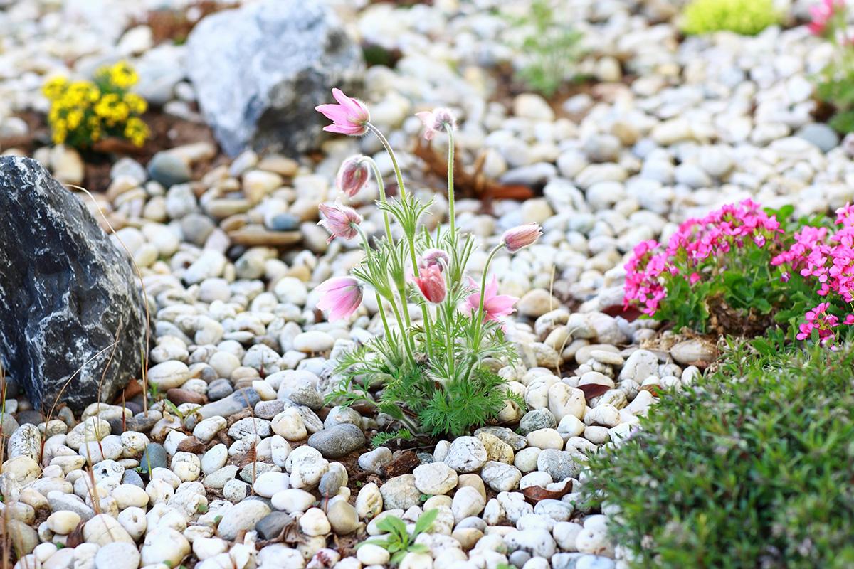 Welche Arten von Kies in den Garten passen, hängt immer vom jeweiligen Umfeld ab.