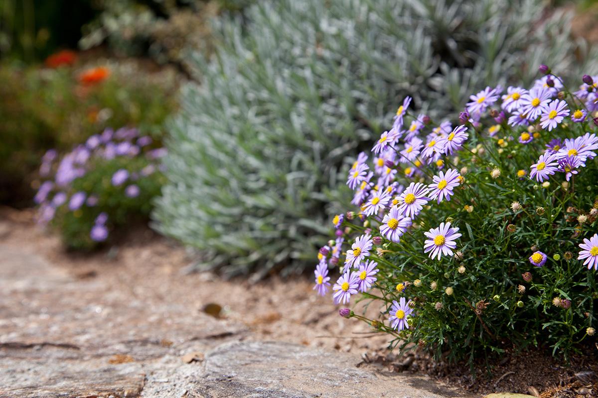 Der mediterranen Flair ist einer der Beliebtesten, der auch in viele Gärten passt.