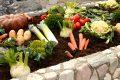 Sie haben die Garantie dafür, dass das Biogemüse wirklich frisch und frei von Pestiziden ist.
