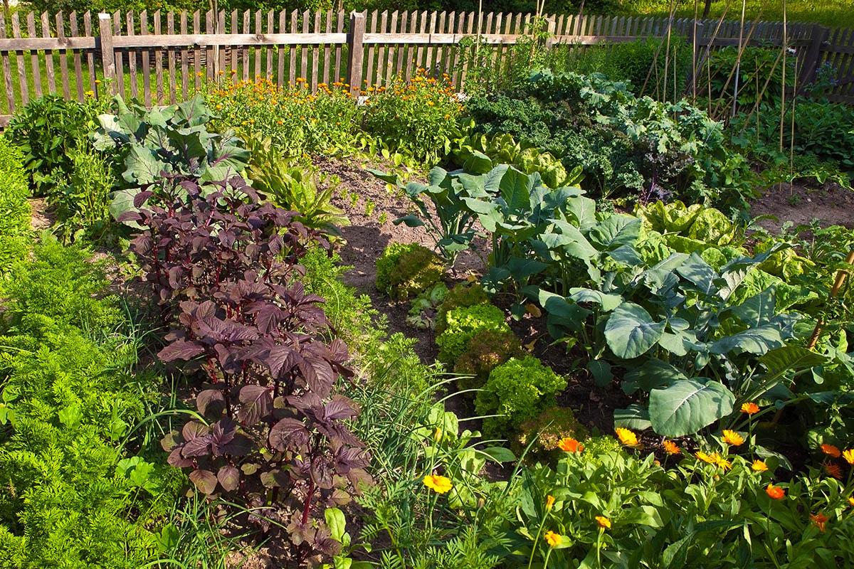 Ihr Gemüse braucht mindestens halbtags Sonne, sodass es richtig reifen kann.