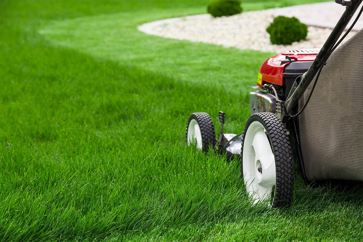 Ein Rasenmäher ist essenziell für jeden Garten.