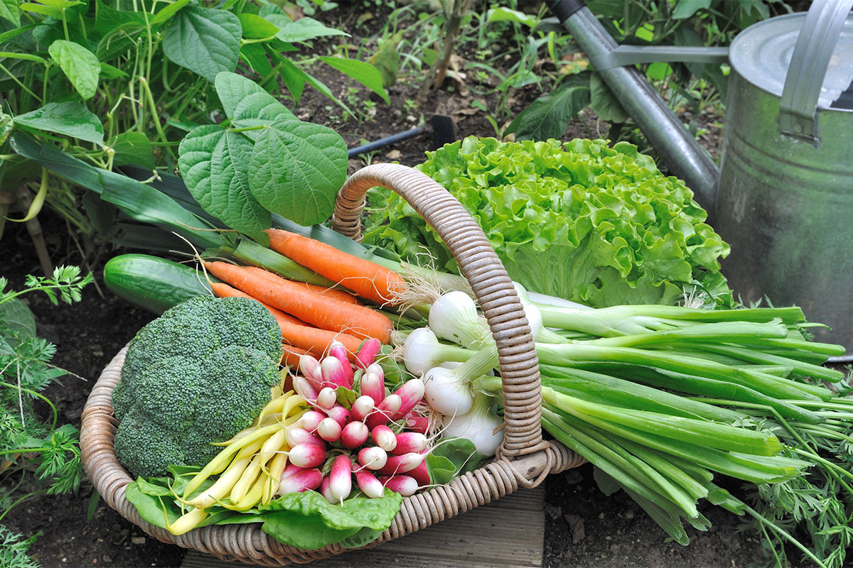 Der richtige Erntezeitpunkt ist bei gewissen Gemüsesorten schwerer erkennbar.