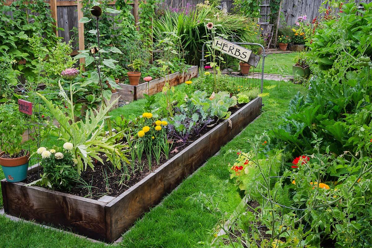 Kräutergarten - Es sollte den einzelnen Pflanzen eine gute Nachbarschaft ermöglicht werden.
