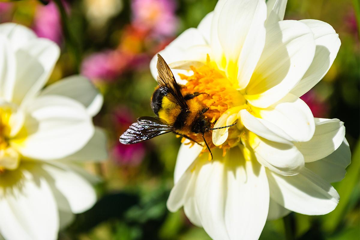 Soll der Garten insektenfreundlich werden, braucht es nicht viel.