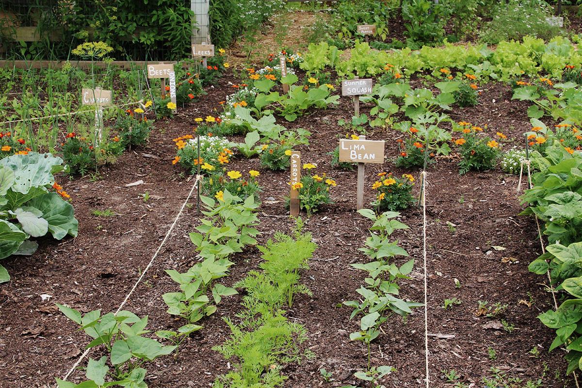 Zum richtigen Anbau von Gemüse gehören nicht nur die richtigen Pflanzzeiten, sondern auch Fruchtfolgen und Standorte.