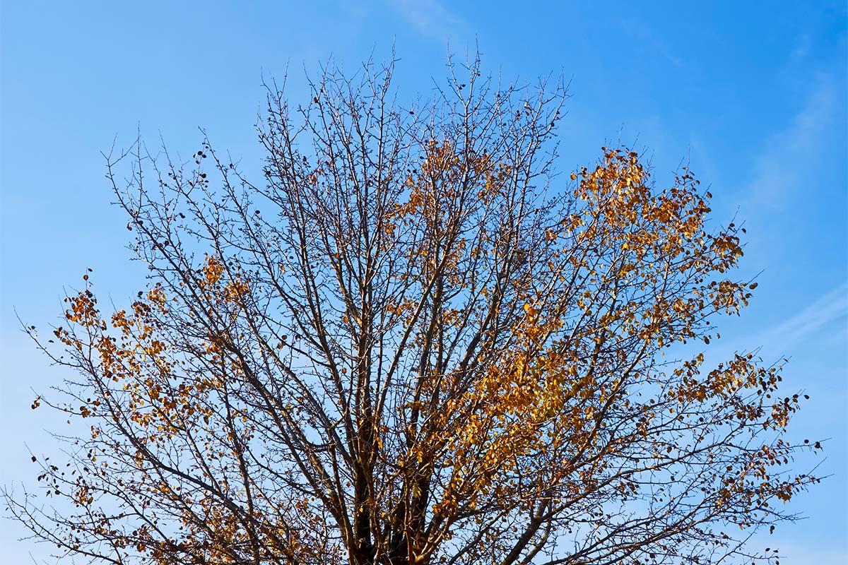 Das Fällen abgestorbener Bäume ist ein wichtiger Bestandteil der Garten- und der Waldpflege.