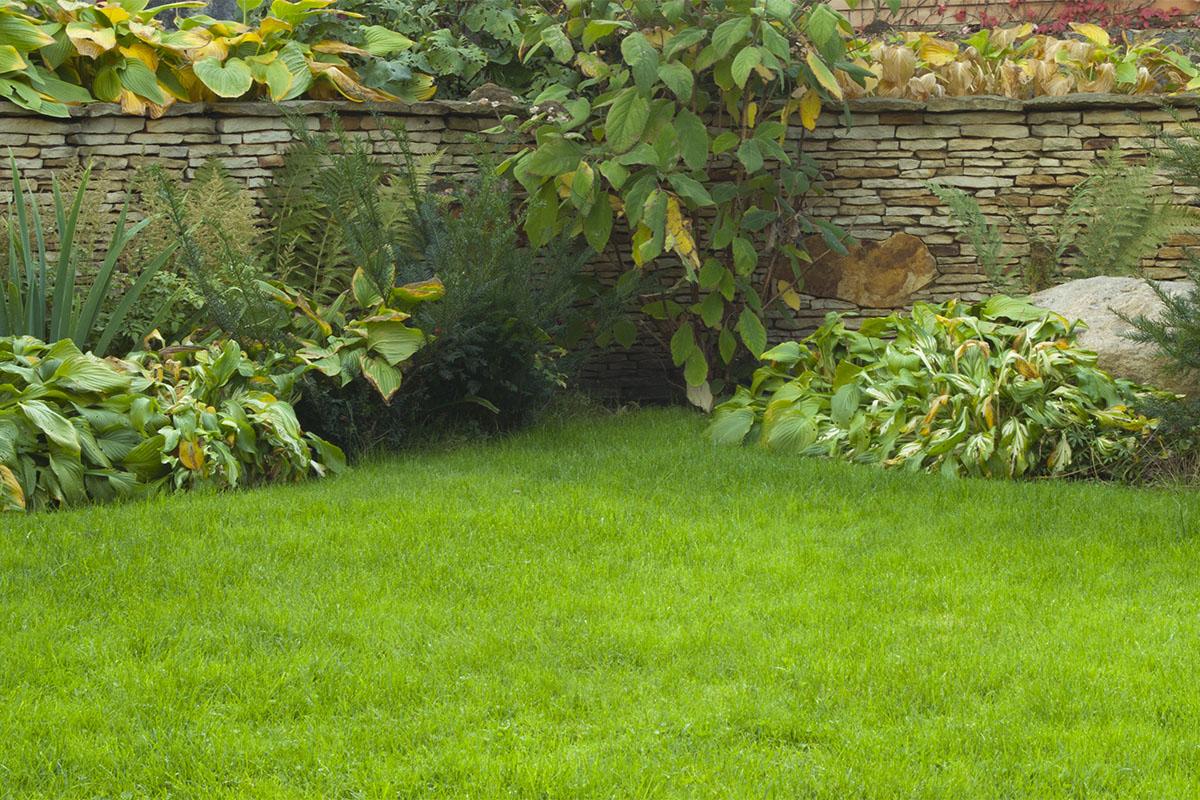 Ein grüner Rasen soll schnell wachsen und keinen hohen Pflegeaufwand erfordern.