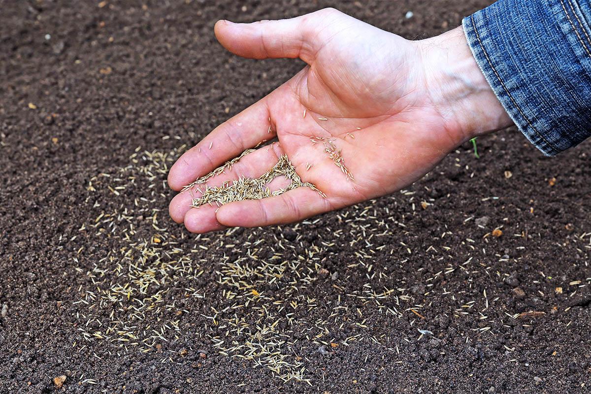Zur Vorbereitung des Bodens gehört vor allem, dass dieser aufgelockert wird.