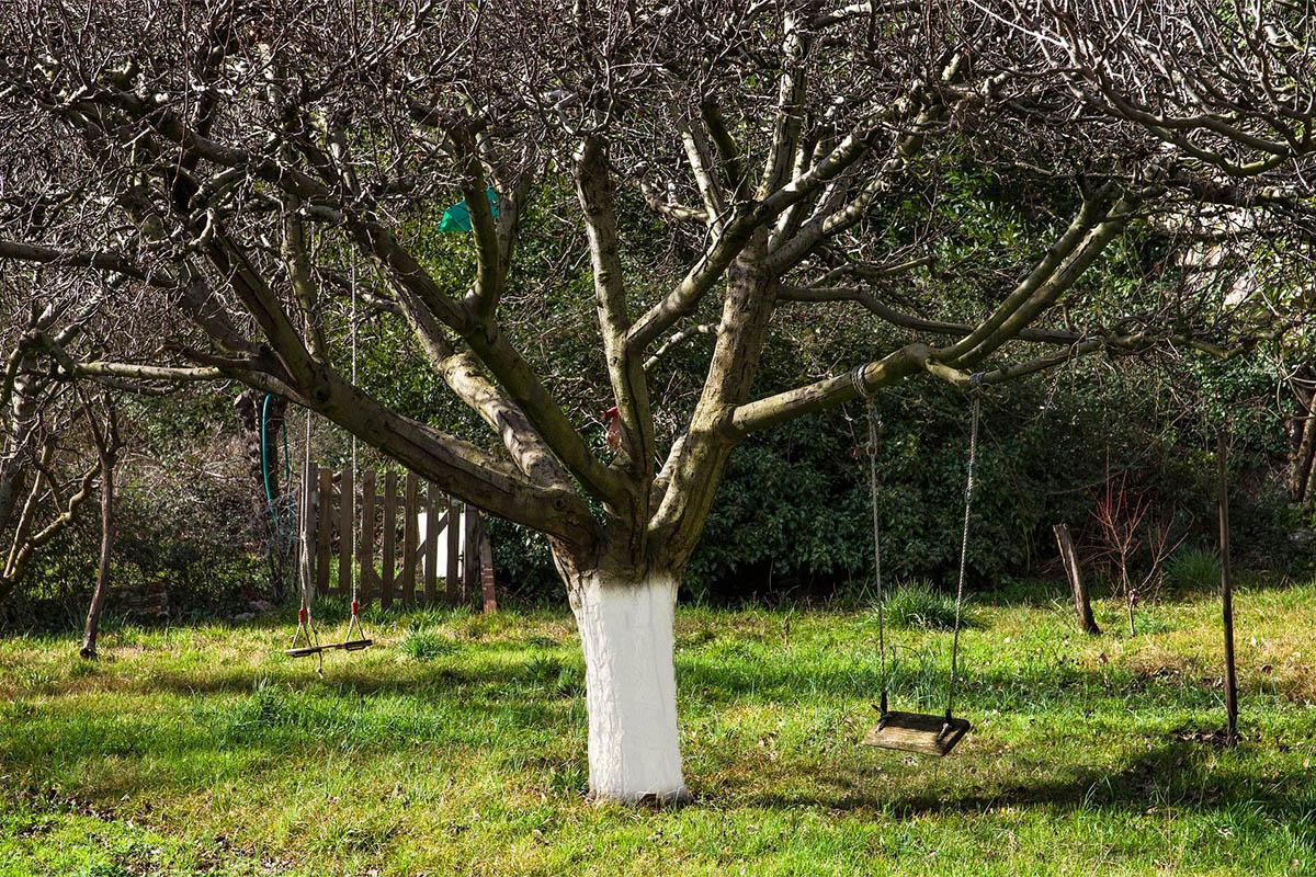 Vor allem im Winter sind Obstbäume starken Belastungen ausgesetzt.