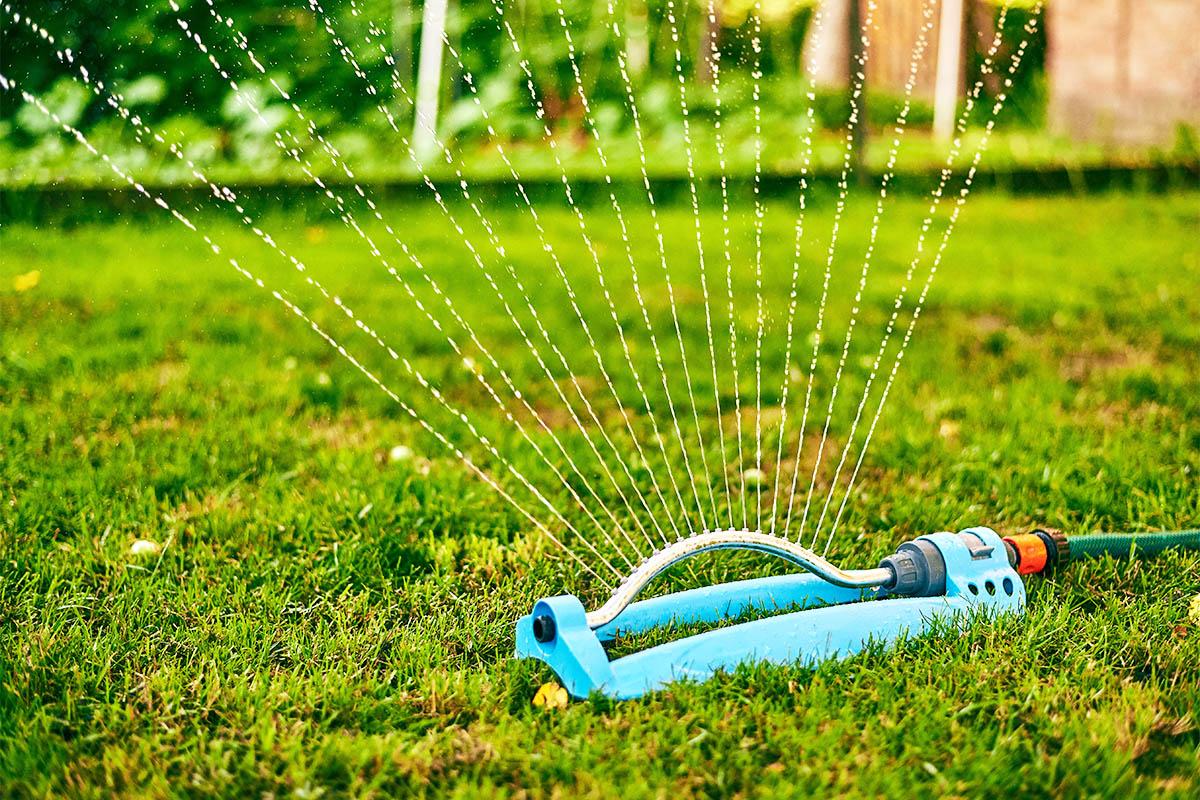 Es sollte zweimal wöchentlich mit etwa 20 Litern pro Quadratmeter bewässert werden.