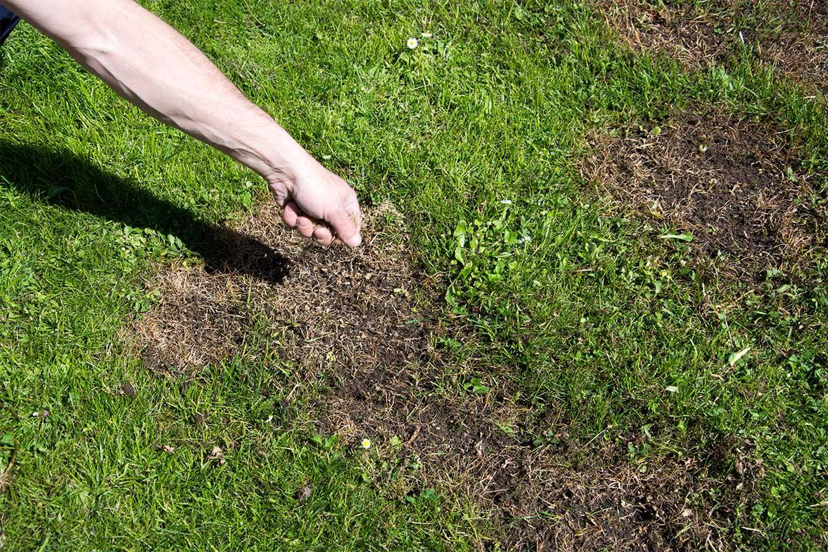 Wenn der Rasen zu sehr ausgerupft wurde, wird das Nachsäen benötigt.