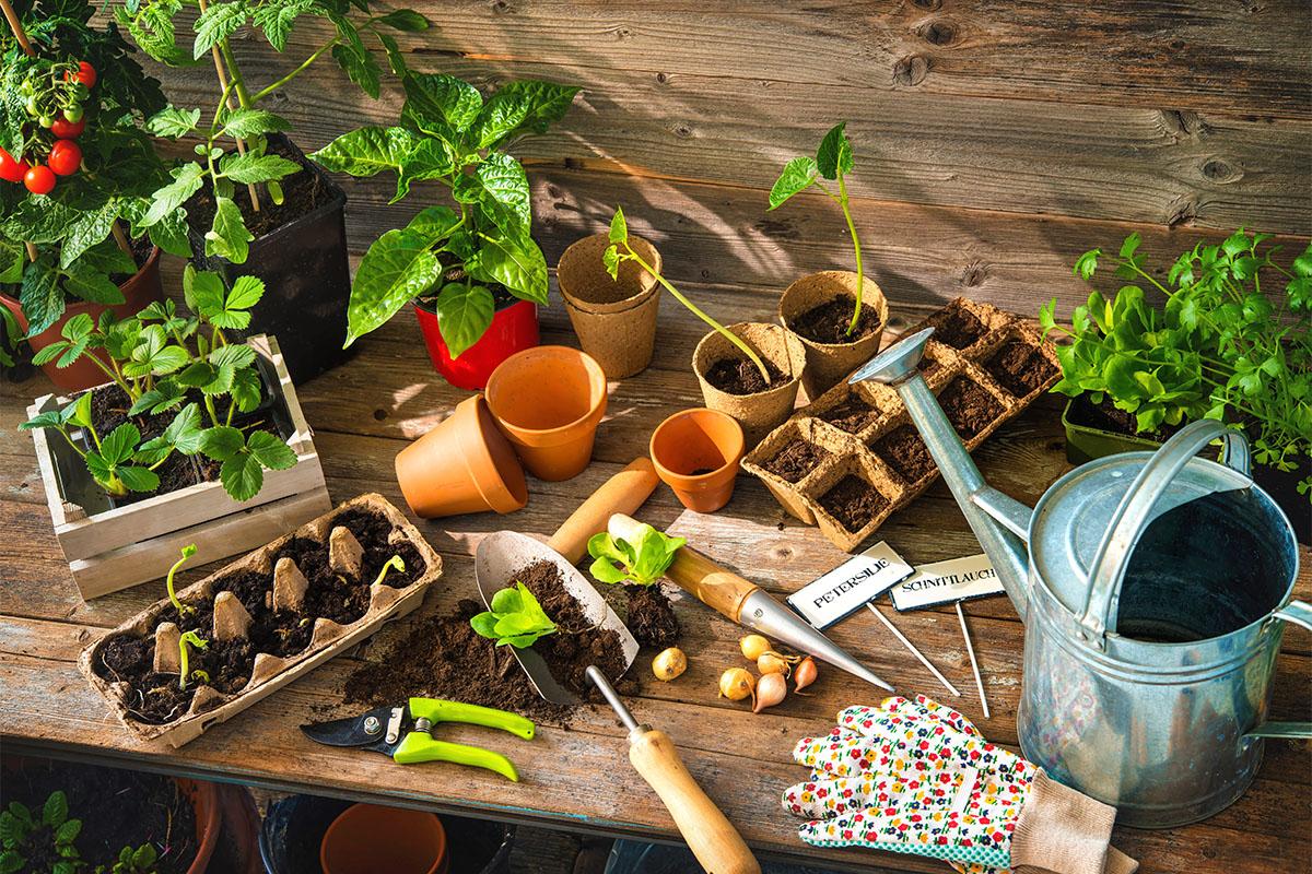 Die eigentliche Anlage des Gartens sollte im Herbst erfolgen.